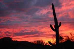 Tucson Arizona Cactus during sunset